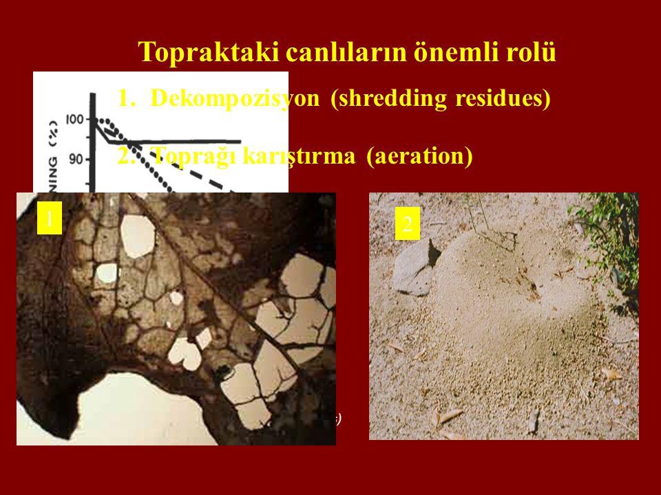 1.Dekompozisyon (shredding residues) 2.Toprağı karıştırma (aeration) Decomposition rate of blue grama (Bouteloua gracilis) Topraktaki canlıların öneml
