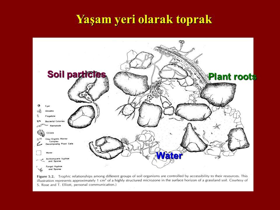 Water Soil particles Plant roots Yaşam yeri olarak toprak