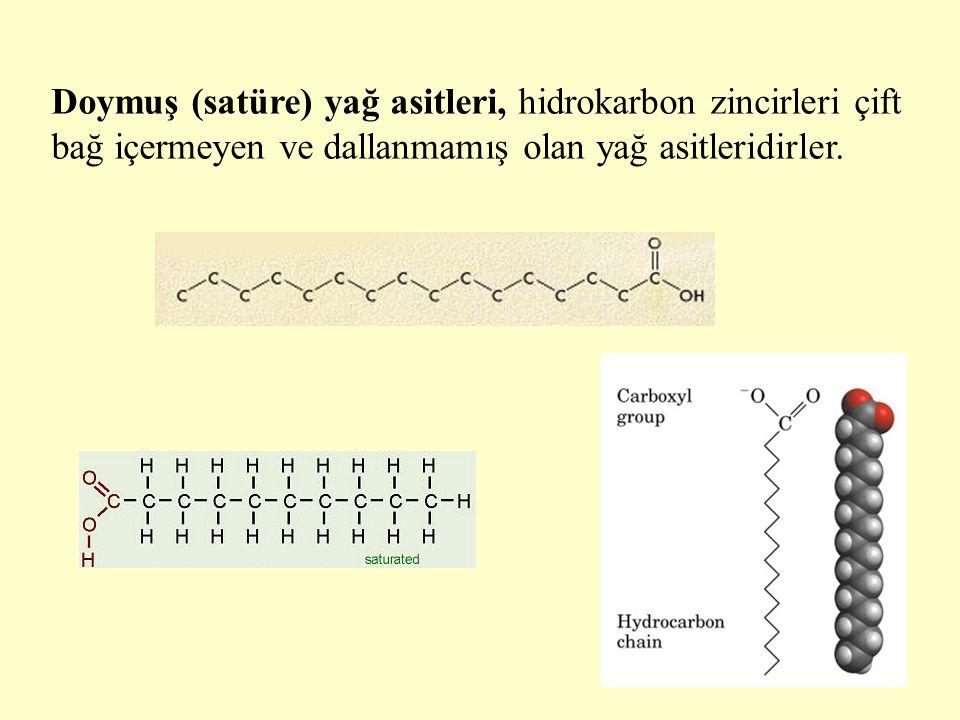 6 Doymuş (satüre) yağ asitleri, hidrokarbon zincirleri çift bağ içermeyen ve dallanmamış olan yağ asitleridirler.