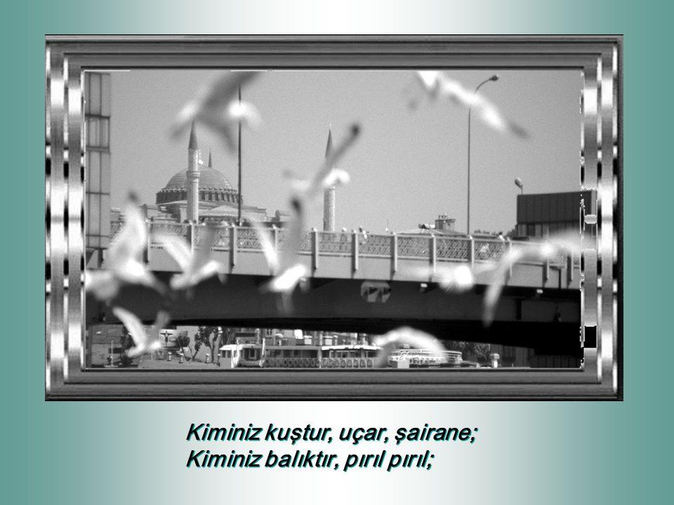 Kiminiz kuştur, uçar, şairane; Kiminiz balıktır, pırıl pırıl; Kiminiz kuştur, uçar, şairane; Kiminiz balıktır, pırıl pırıl;
