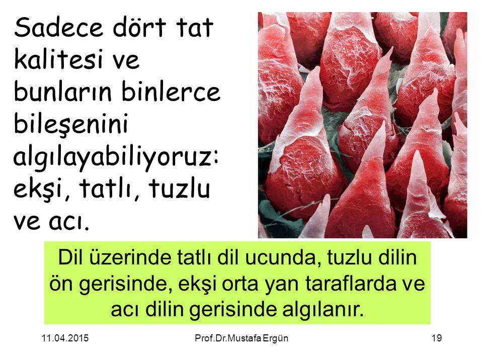 11.04.2015Prof.Dr.Mustafa Ergün19 Sadece dört tat kalitesi ve bunların binlerce bileşenini algılayabiliyoruz: ekşi, tatlı, tuzlu ve acı. Dil üzerinde