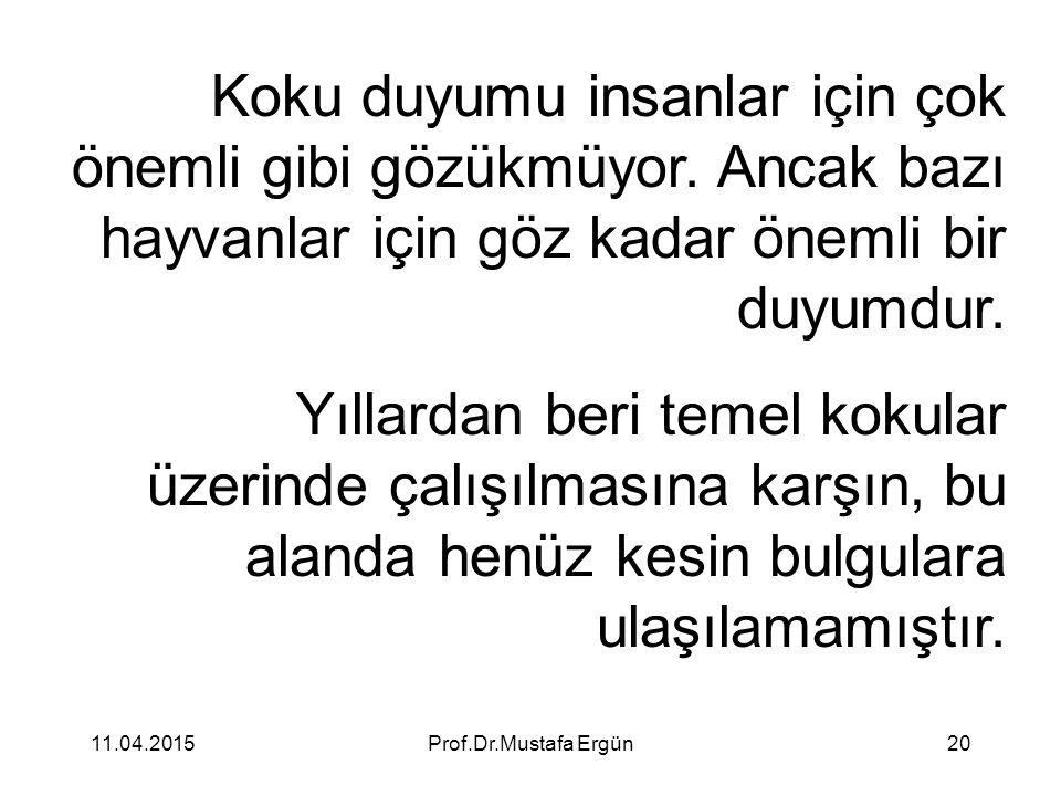 11.04.2015Prof.Dr.Mustafa Ergün20 Koku duyumu insanlar için çok önemli gibi gözükmüyor. Ancak bazı hayvanlar için göz kadar önemli bir duyumdur. Yılla