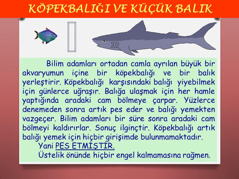 KÖPEKBALI Ğ I VE KÜÇÜK BALIK Bilim adamları ortadan camla ayrılan büyük bir akvaryumun içine bir köpekbalığı ve bir balık yerleştirir. Köpekbalığı kar