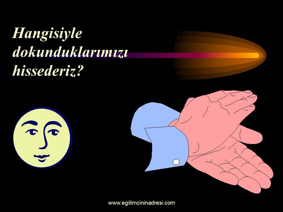 Hangisiyle dokunduklarımızı hissederiz? www.egitimcininadresi.com