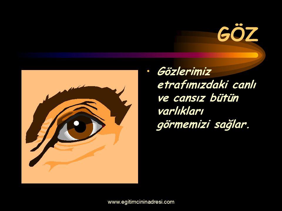 GÖZ Gözlerimiz etrafımızdaki canlı ve cansız bütün varlıkları görmemizi sağlar. www.egitimcininadresi.com
