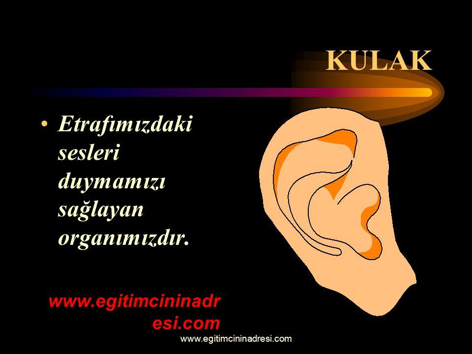 KULAK Etrafımızdaki sesleri duymamızı sağlayan organımızdır. www.egitimcininadr esi.com