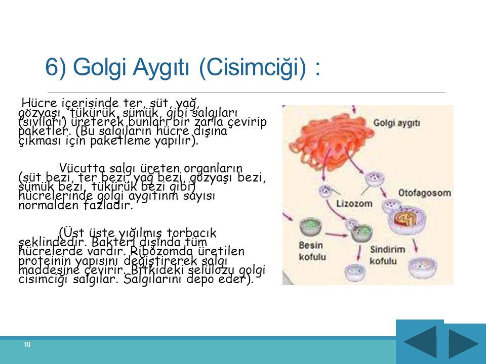 6) Golgi Aygıtı (Cisimciği) : Hücre içerisinde ter, süt, yağ, gözyaşı, tükürük, sümük, gibi salgıları (sıvıları) üreterek bunları bir zarla çevirip pa