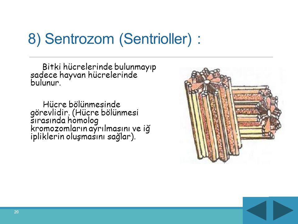 8) Sentrozom (Sentrioller) : Bitki hücrelerinde bulunmayıp sadece hayvan hücrelerinde bulunur. Hücre bölünmesinde görevlidir. (Hücre bölünmesi sırasın