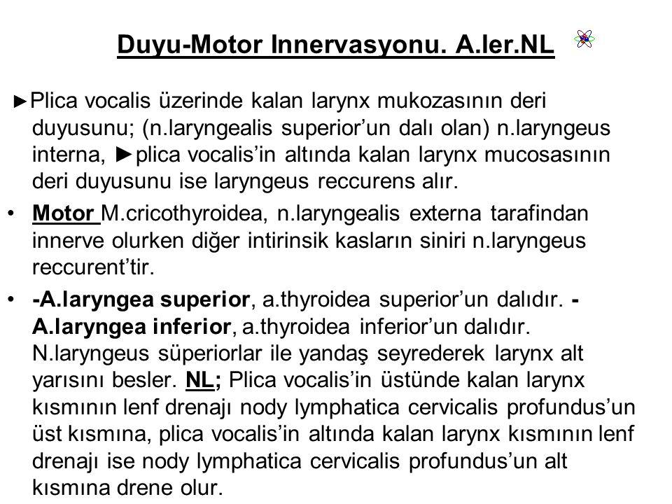 Duyu-Motor Innervasyonu.