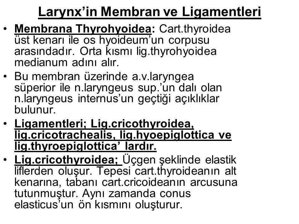 Larynx'in Membran ve Ligamentleri Membrana Thyrohyoidea: Cart.thyroidea üst kenarı ile os hyoideum'un corpusu arasındadır.