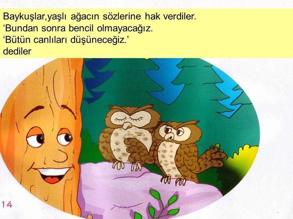 Baykuşlar,yaşlı ağacın sözlerine hak verdiler. 'Bundan sonra bencil olmayacağız. 'Bütün canlıları düşüneceğiz.' dediler