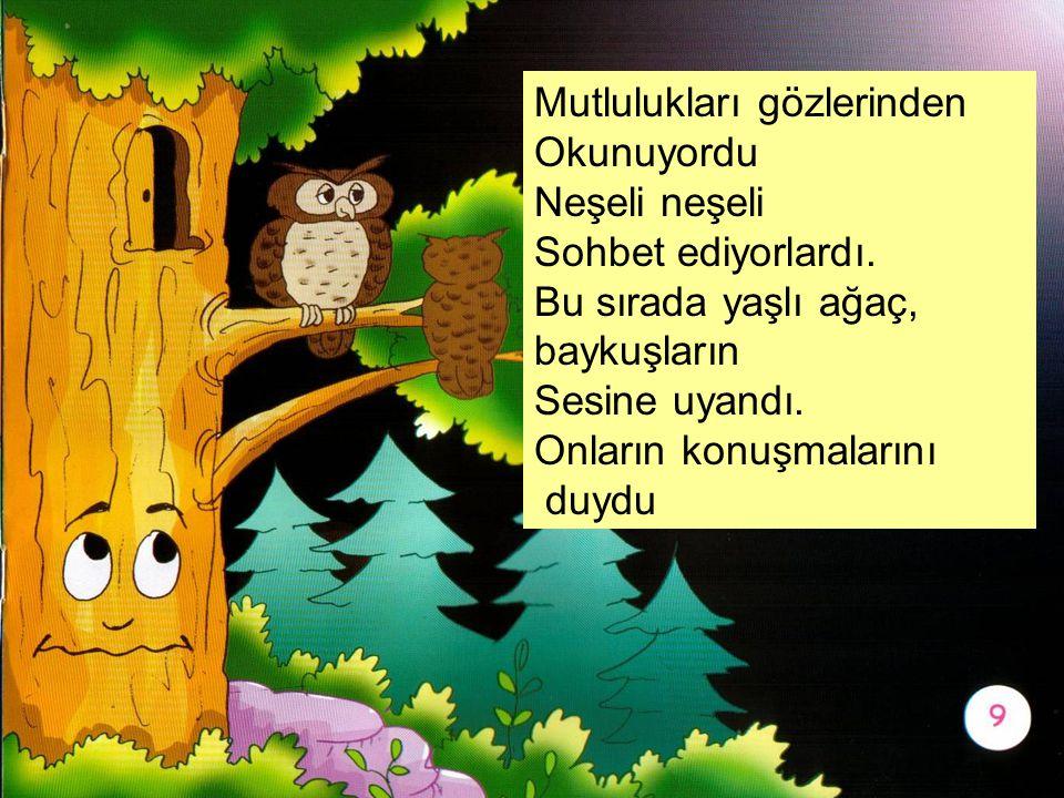 Mutlulukları gözlerinden Okunuyordu Neşeli neşeli Sohbet ediyorlardı. Bu sırada yaşlı ağaç, baykuşların Sesine uyandı. Onların konuşmalarını duydu