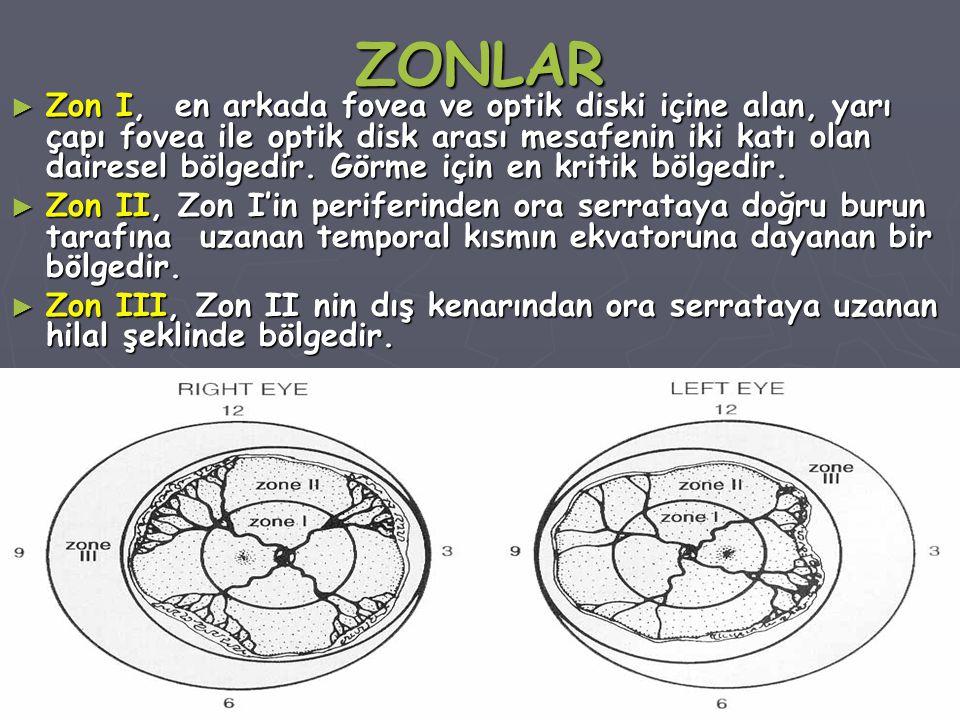 ZONLAR ► Zon I, en arkada fovea ve optik diski içine alan, yarı çapı fovea ile optik disk arası mesafenin iki katı olan dairesel bölgedir.