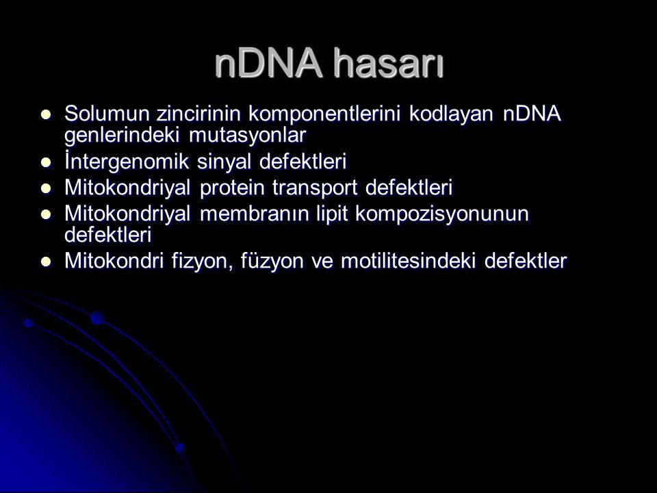 nDNA hasarı Solumun zincirinin komponentlerini kodlayan nDNA genlerindeki mutasyonlar Solumun zincirinin komponentlerini kodlayan nDNA genlerindeki mu
