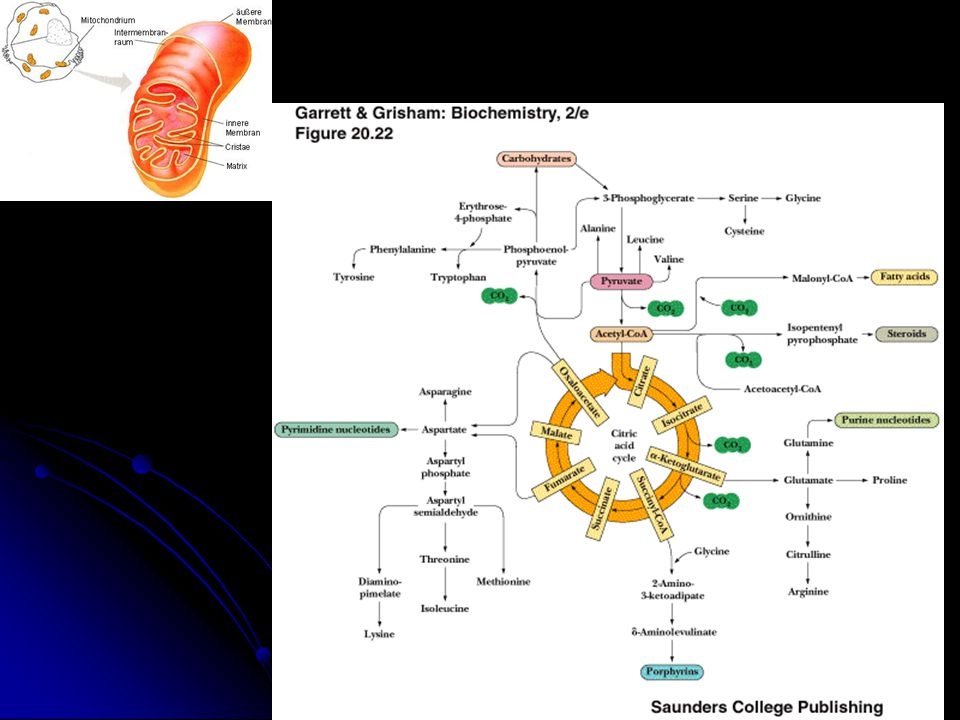 Piruvat dehidrogenaz kompleksi (PDHC) Piruvat dehidrogenaz kompleksi (PDHC) Carnitine siklusu Carnitine siklusu β-oksidasyon sistemi β-oksidasyon sistemi Krebs siklusu Krebs siklusu