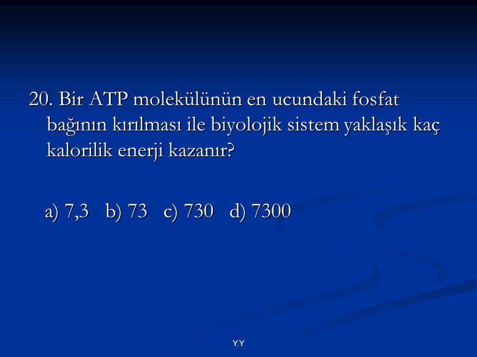 Y.Y 20. Bir ATP molekülünün en ucundaki fosfat bağının kırılması ile biyolojik sistem yaklaşık kaç kalorilik enerji kazanır? a) 7,3 b) 73 c) 730 d) 73