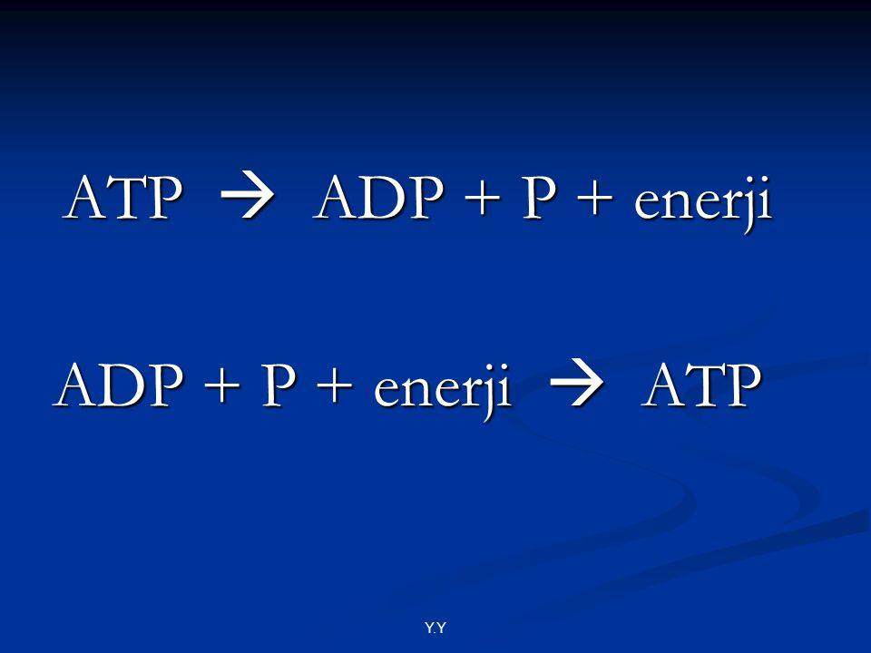 ATP  ADP + P + enerji ATP  ADP + P + enerji ADP + P + enerji  ATP