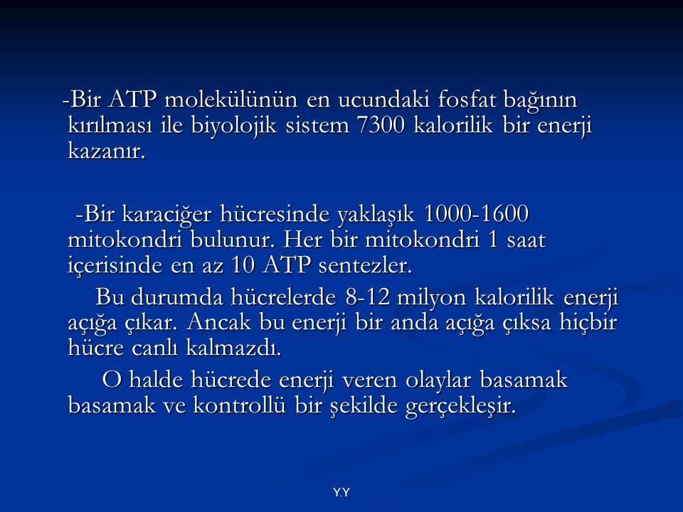 -Bir ATP molekülünün en ucundaki fosfat bağının kırılması ile biyolojik sistem 7300 kalorilik bir enerji kazanır. -Bir ATP molekülünün en ucundaki fos