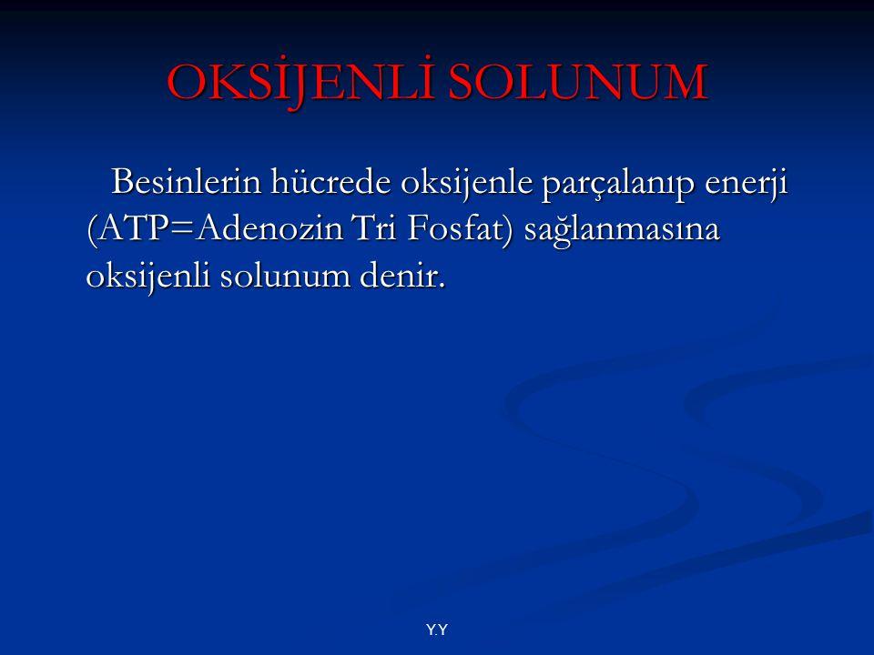 Y.Y OKSİJENLİ SOLUNUM Besinlerin hücrede oksijenle parçalanıp enerji (ATP=Adenozin Tri Fosfat) sağlanmasına oksijenli solunum denir. Besinlerin hücred