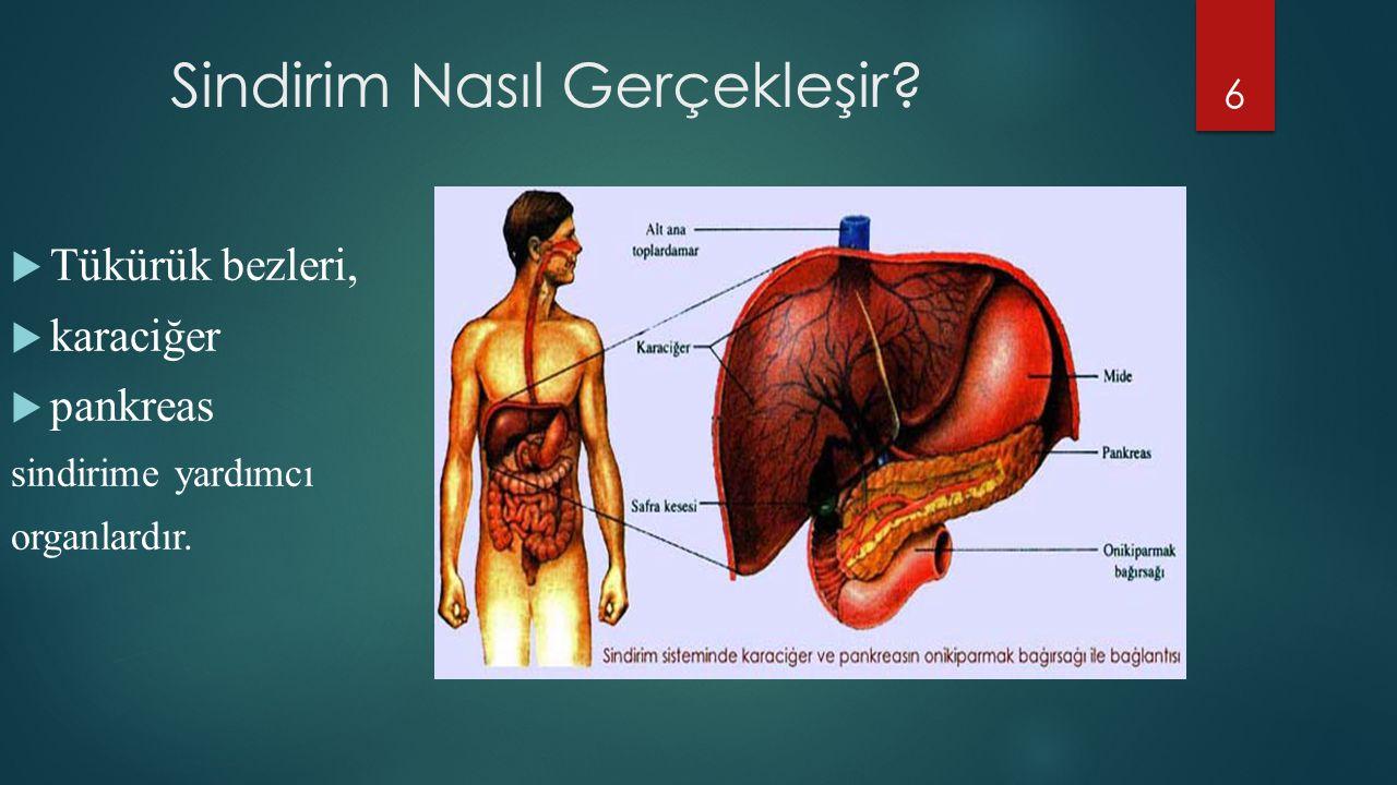 Tükürük bezleri,  karaciğer  pankreas sindirime yardımcı organlardır. 6 Sindirim Nasıl Gerçekleşir?