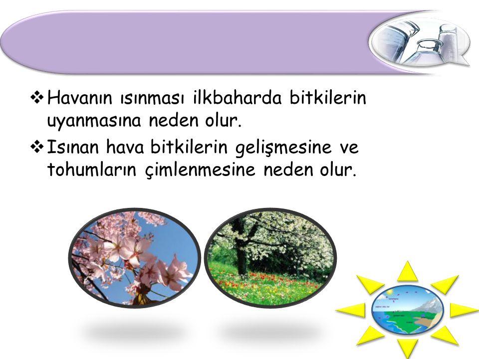  Havanın ısınması ilkbaharda bitkilerin uyanmasına neden olur.  Isınan hava bitkilerin gelişmesine ve tohumların çimlenmesine neden olur.