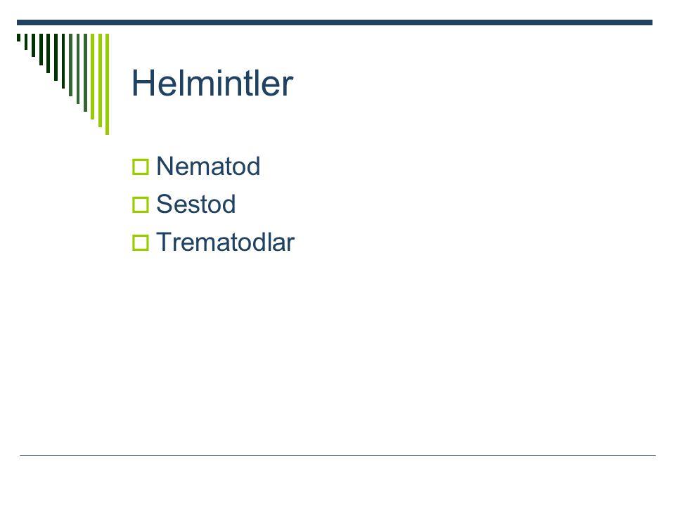 Helmintler  Nematod  Sestod  Trematodlar