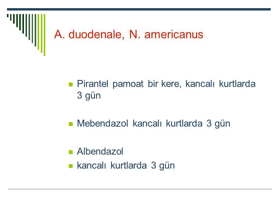 A. duodenale, N. americanus Pirantel pamoat bir kere, kancalı kurtlarda 3 gün Mebendazol kancalı kurtlarda 3 gün Albendazol kancalı kurtlarda 3 gün