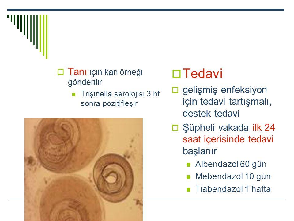  Tanı için kan örneği gönderilir Trişinella serolojisi 3 hf sonra pozitifleşir  Tedavi  gelişmiş enfeksiyon için tedavi tartışmalı, destek tedavi 