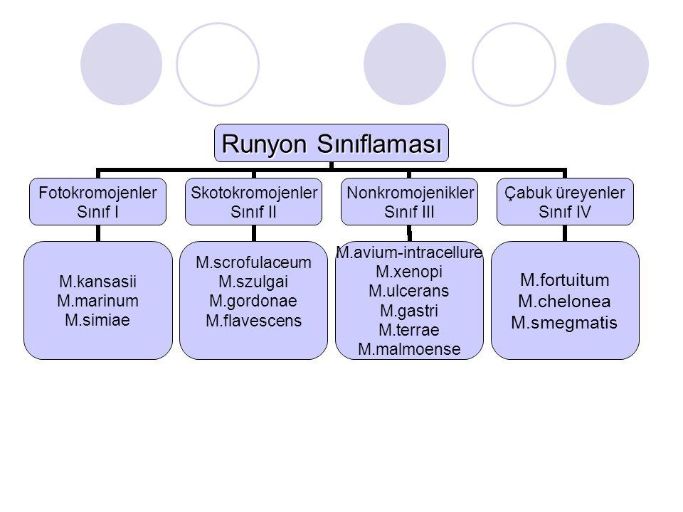 Runyon Sınıflaması Fotokromojenler Sınıf I M.kansasii M.marinum M.simiae Skotokromojenler Sınıf II M.scrofulaceum M.szulgai M.gordonae M.flavescens No