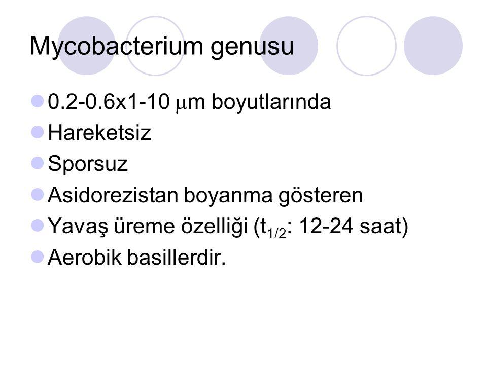 Mycobacterium genusu 0.2-0.6x1-10  m boyutlarında Hareketsiz Sporsuz Asidorezistan boyanma gösteren Yavaş üreme özelliği (t 1/2 : 12-24 saat) Aerobik