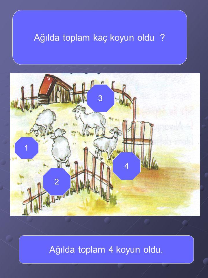 Kaç tane koyun geliyor ? Acaba ağılda toplam kaç koyun olmuş olur ?