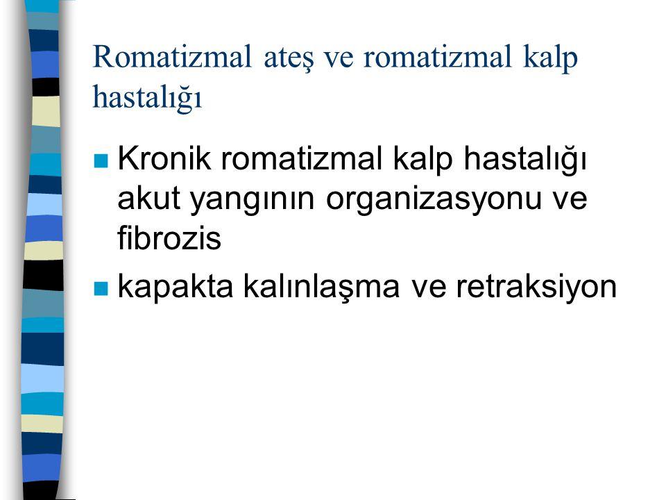 Romatizmal ateş ve romatizmal kalp hastalığı n Kronik romatizmal kalp hastalığı akut yangının organizasyonu ve fibrozis n kapakta kalınlaşma ve retrak