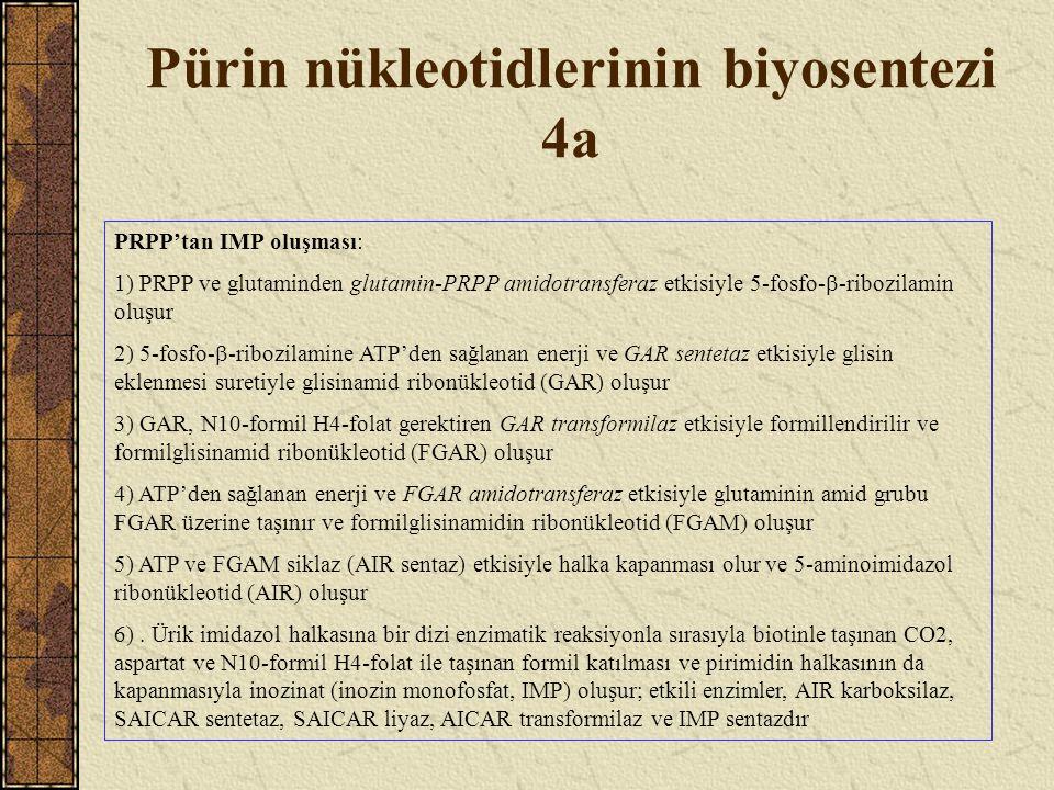 Pürin nükleotidlerinin biyosentezi 4a PRPP'tan IMP oluşması: 1) PRPP ve glutaminden glutamin-PRPP amidotransferaz etkisiyle 5-fosfo-  -ribozilamin ol
