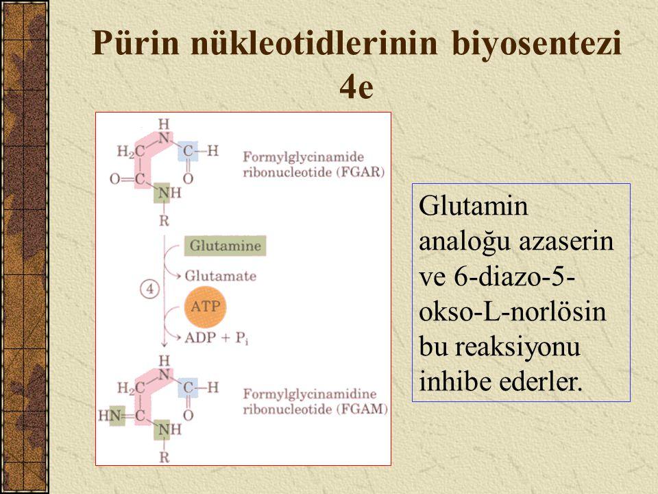 Pürin nükleotidlerinin biyosentezi 4e Glutamin analoğu azaserin ve 6-diazo-5- okso-L-norlösin bu reaksiyonu inhibe ederler.