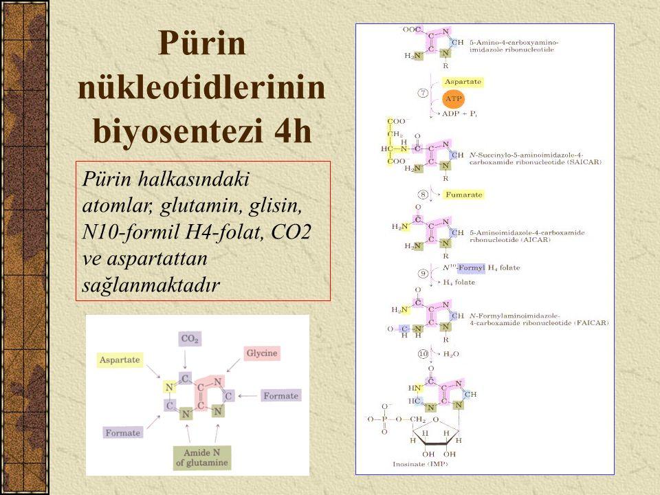Pürin nükleotidlerinin biyosentezi 4h Pürin halkasındaki atomlar, glutamin, glisin, N10-formil H4-folat, CO2 ve aspartattan sağlanmaktadır