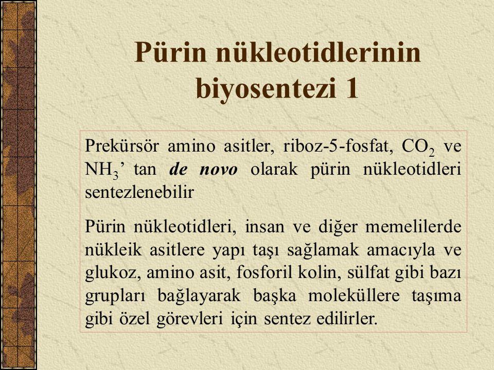 Pürin nükleotidlerinin biyosentezi 1 Prekürsör amino asitler, riboz-5-fosfat, CO 2 ve NH 3 ' tan de novo olarak pürin nükleotidleri sentezlenebilir Pü