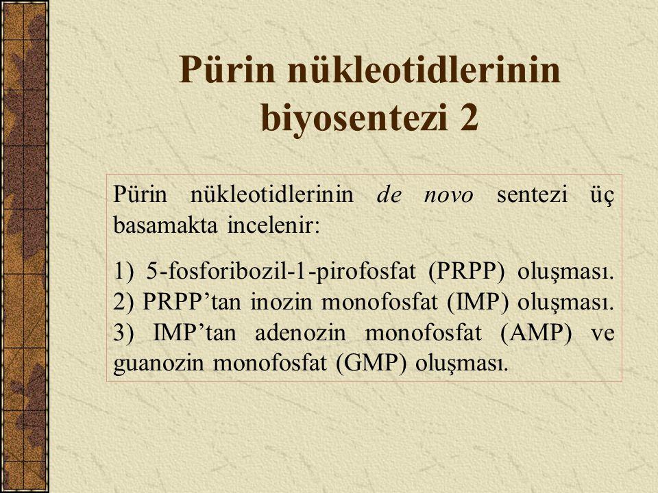 Pürin nükleotidlerinin biyosentezi 2 Pürin nükleotidlerinin de novo sentezi üç basamakta incelenir: 1) 5-fosforibozil-1-pirofosfat (PRPP) oluşması. 2)