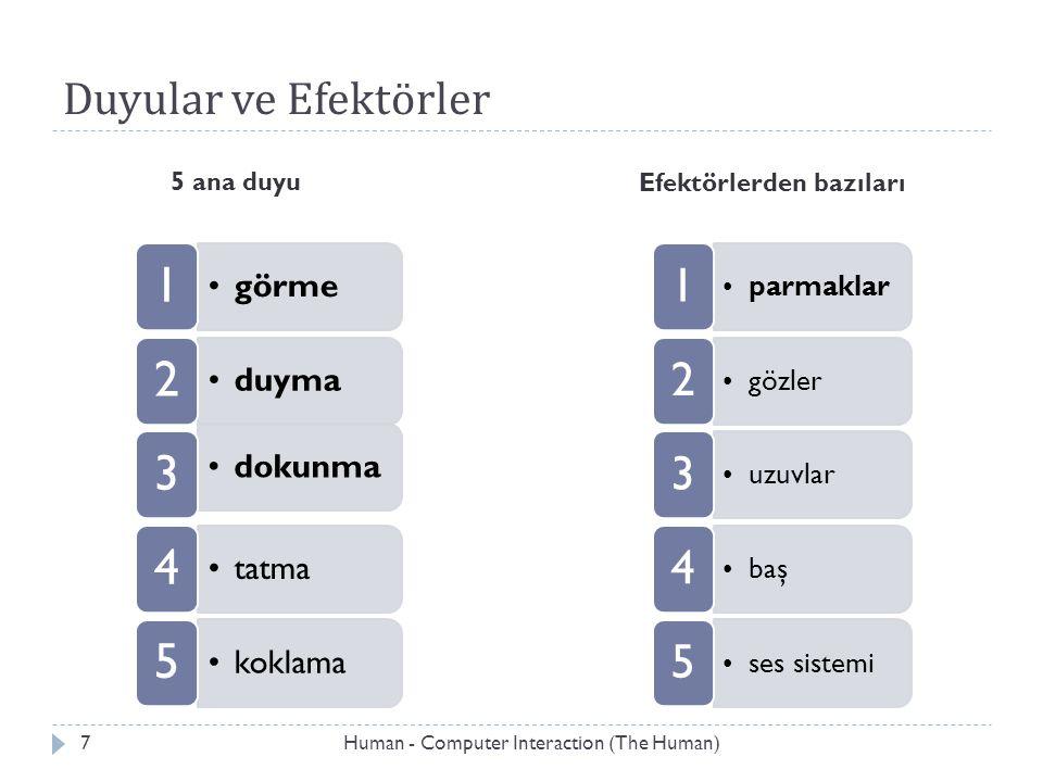 Duyular ve Efektörler görme 1 duyma 2 dokunma 3 tatma 4 koklama 5 parmaklar 1 gözler 2 uzuvlar 3 baş 4 ses sistemi 5 5 ana duyu Efektörlerden bazıları