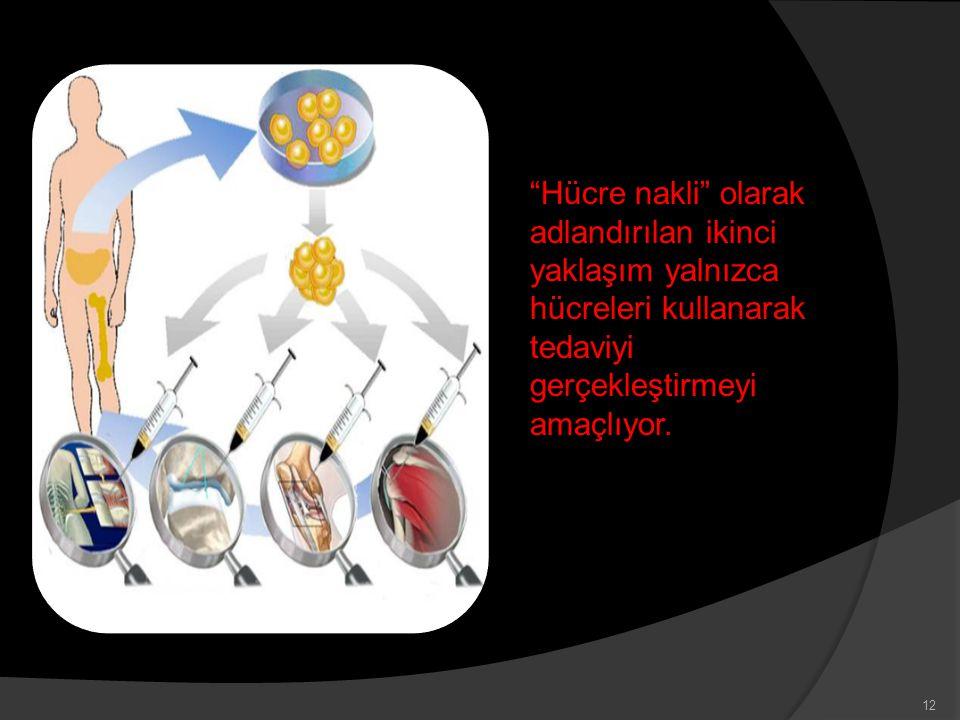 """""""Hücre nakli"""" olarak adlandırılan ikinci yaklaşım yalnızca hücreleri kullanarak tedaviyi gerçekleştirmeyi amaçlıyor. 12"""