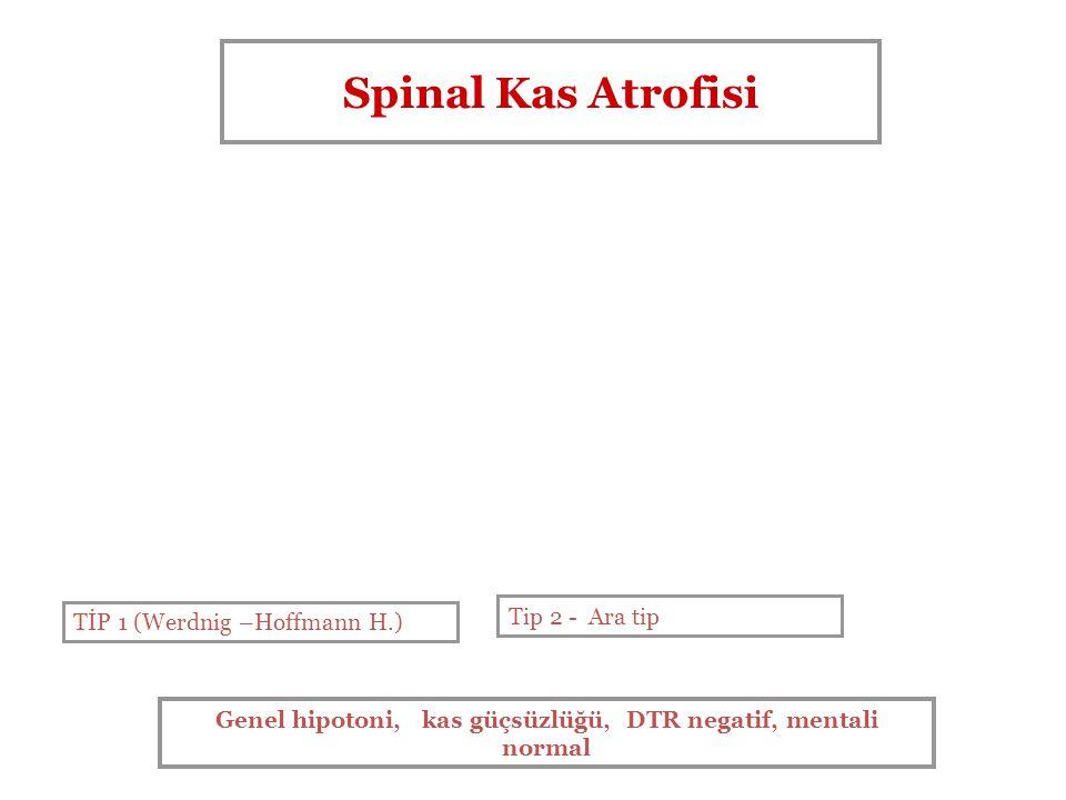 Spinal Kas Atrofisi TİP 1 (Werdnig –Hoffmann H.) Tip 2 - Ara tip Genel hipotoni, kas güçsüzlüğü, DTR negatif, mentali normal