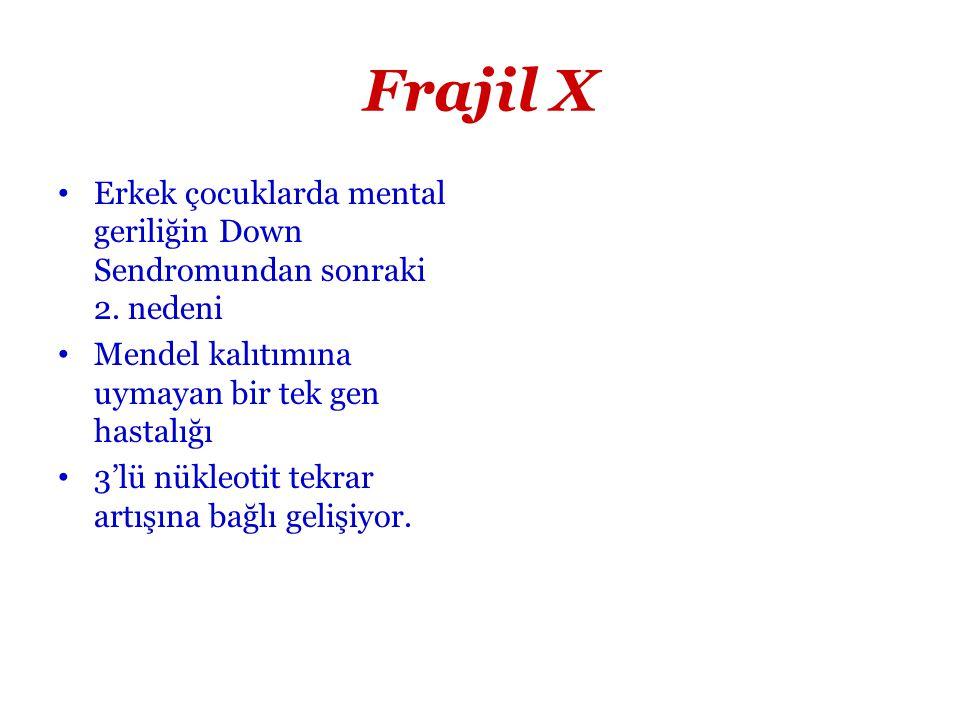 Frajil X Erkek çocuklarda mental geriliğin Down Sendromundan sonraki 2. nedeni Mendel kalıtımına uymayan bir tek gen hastalığı 3'lü nükleotit tekrar a