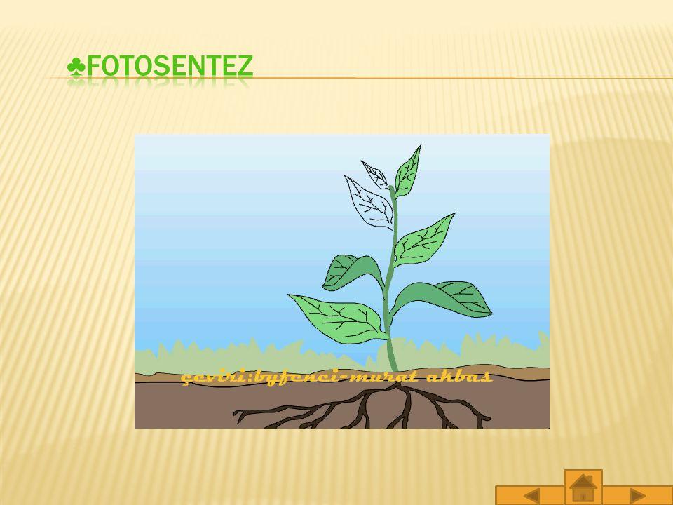 Bitkiler yaşamlarını sürdürmek için gerekli enerjiyi nereden sağlarlar