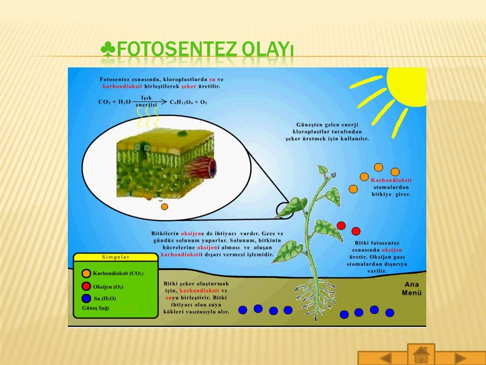 Hayvansal enerjiyi elde etmek için besinlerini diğer canlılardan karşılar.Bitkiler ise kendi besinlerini kendi yapar.Bununla birlikte bitkilerin besin yapmaları sırasında da enerji kullanılır.Bu enerji ışıktan, özellikle de güneş ışığından karşılanır.Işık, bitkilerin kendi besinlerini yapmalarını sağlayan bir enerjidir.