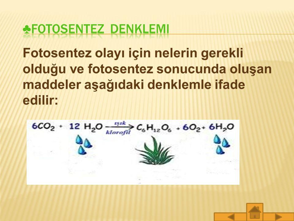 Klorofil ise kloroplastlar içerisinde yer alan yeşil renkli ve fotosentez olayında önemli rol oynayan bir moleküldür.
