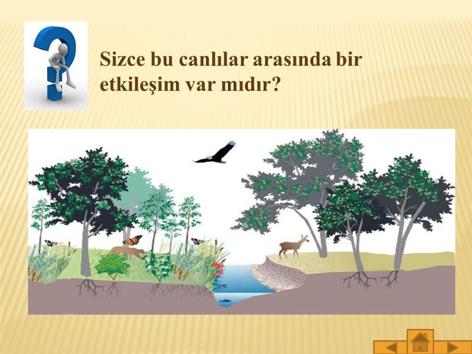 Böylece ormanlar fotosentez sonucu solunum için gerekli olan oksijeni de oluşturur.Hayatımızda bu kadar önemli rolü olan ormanlarımızı korumalıyız.
