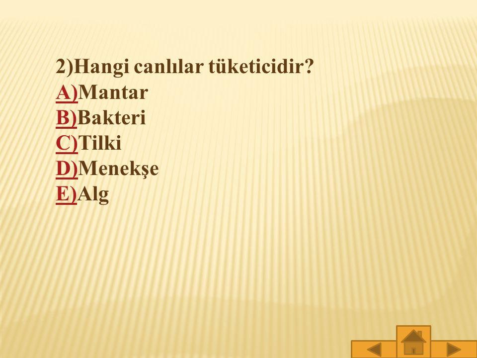 1)Hangi canlılar üreticidir? A)A)Aslan B)B)Kartal C)C)Yengeç D)D)Gül E)E)Fare