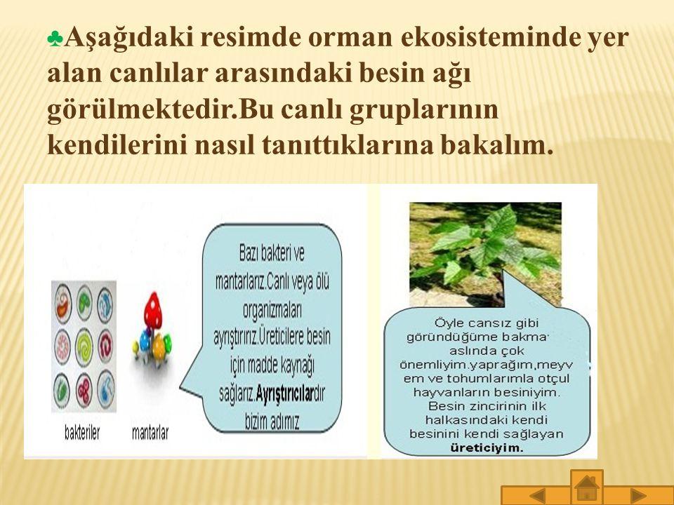 ♣ Aşağıdaki resimde orman ekosisteminde yer alan canlılar arasındaki besin ağı görülmektedir.Bu canlı gruplarının kendilerini nasıl tanıttıklarına bakalım.