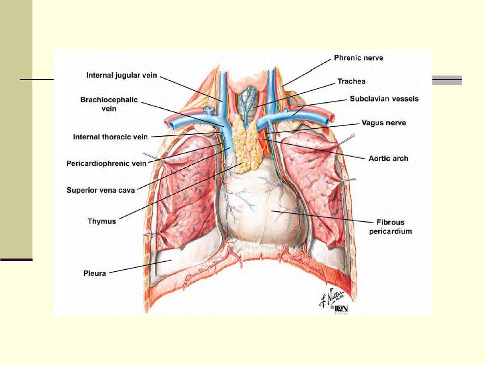 Mediastinum Anatomik ve cerrahi bakış açısından mediasten üç kompartmana ayrılır.
