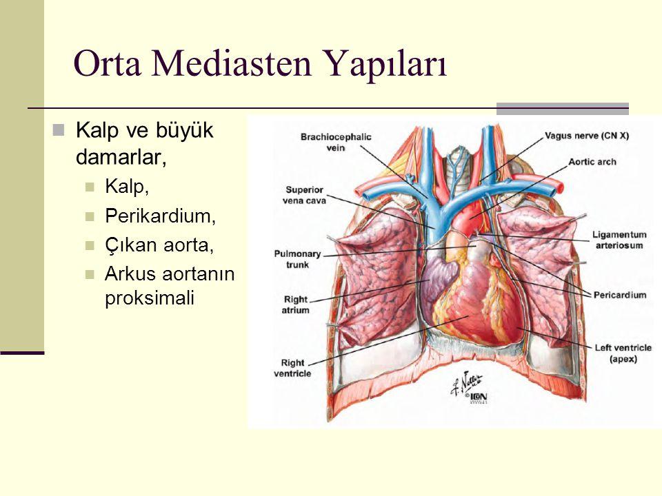 Orta Mediasten Yapıları Kalp ve büyük damarlar, Kalp, Perikardium, Çıkan aorta, Arkus aortanın proksimali