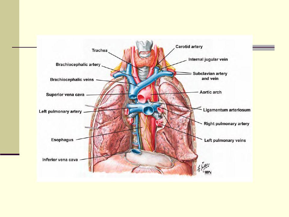 Bronkogenik kist Tedavi Komplet cerrahi eksizyon Tam kürdür.
